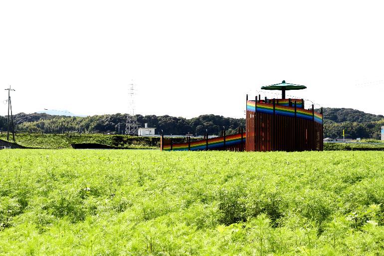 【平成29年10月5日現在】花公園コスモスの状況
